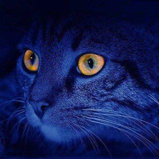 Blaue Katz